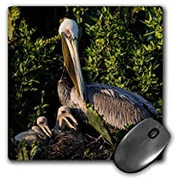 3dRose Brown Pelican Taking Care of Its Nestlings Mouse Pad (mp_279457_1) [並行輸入品]