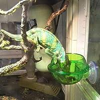 Sefod ペットボウル 爬虫類フィーダー 壁掛け 省スペース 吸着式 固定 衛生 安全 ペット食器 水皿 餌皿 フィーダー ペットカメフィーダー レオントカゲフィーダー用品 爬虫類 餌入れ インテリア 掌のサイズ