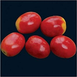 german lunchbox tomato
