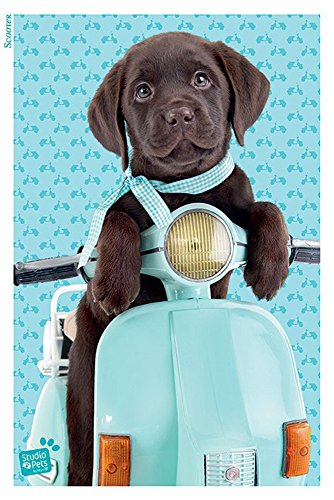 Studio Pets Labrador Scooter - Roller Moped Hund Tiere Animal Poster Plakat Druck - Grösse 61x91,5 cm