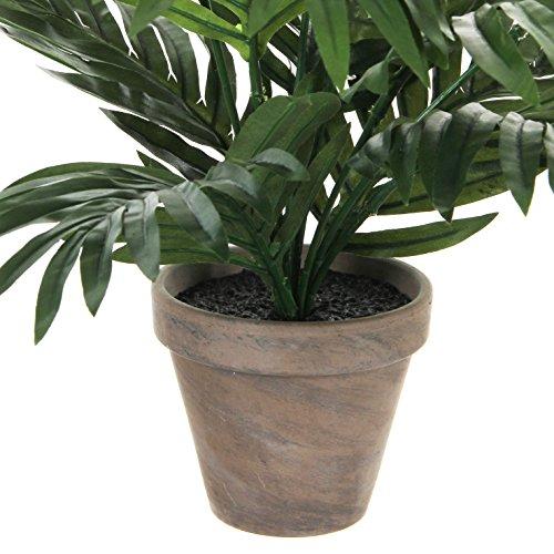 Areca Palme H45 D60 cm, grün im Tontopf D 11.5  cm - 2