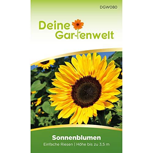 Sonnenblumen Einfache Riesen | Samen für große und hohe Blumen | Helianthus annuus Saatgut | Sonnenblumensamen