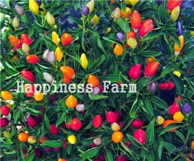 SANHOC Livraison Gratuite 200 pcs Piment légumes Doux de Bell Hot Pepper Bonsai Chilli légumes Paprika Plante pour Jardin Fleur: Un