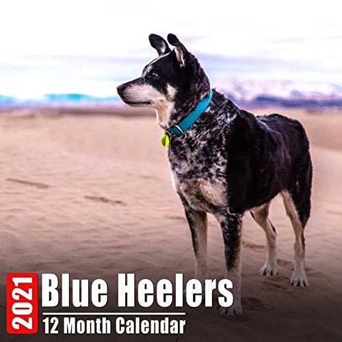 Calendar 2021 Blue Heelers: Cute Blue Heeler Photos Monthly Mini Calendar With Inspirational Quotes each Month