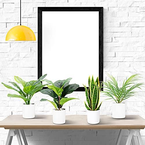 CROSOFMI Plantas