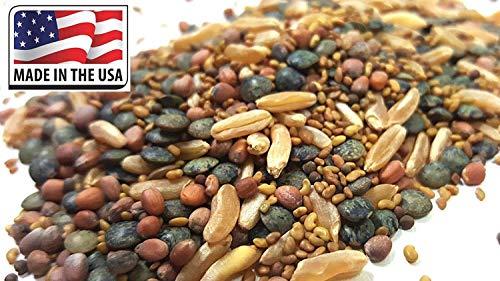 Samen-Paket Nicht Pflanzen: 3X Micro Grüner Deckel + 9000 Samen: CloverBroccoli KamutBlack Lentils Sprießen USDA Seed