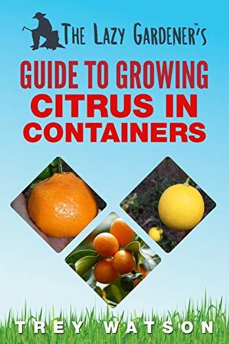 citrusträd bauhaus
