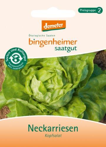 Bingenheimer Saatgut - Kopfsalat Neckarriesen - Gemüse Saatgut / Samen
