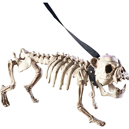 White Dog Skeleton for Halloween Decor