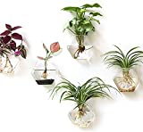 Kingbuy Wall Hanging Planter Glass Propagation Terrarium Hexagon Shape Flower Vase for Home Office Christmas Decor, 3 Pack, Medium