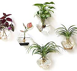 Christmas gits for plant lovers - Carmen Whitehead Designs