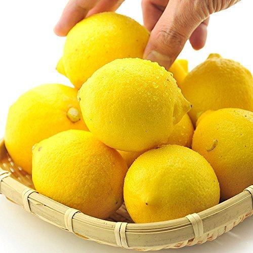 うめ海鮮 国産 訳あり レモン 10kg(サイズ未選別 有機肥料栽培)