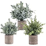 3 Pack Mini Artificial Potted Plants, Faux Eucalyptus Plants Boxwood Rosemary Greenery with Pots Small Houseplants for Home Decor Office Desk Indoor Decoration Theme Birthday Party Decoration