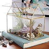 Terrarium / Gewächshaus in Haus-Form