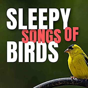 Sleepy songs of Birds
