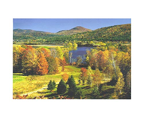 Outletdelocio.. Puzzle Naturaleza 1000 Piezas. Paisaje Otoño en Vermont. Estados Unidos.