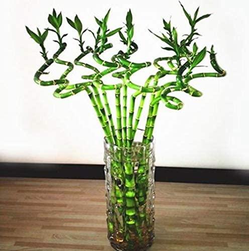 lucky bambou ikea