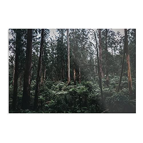 Poster generico Monbulk Temperate Rain Forest – Stampa Art Trends Design I – Decorazione senza cornice per la casa – Personalizzabile.