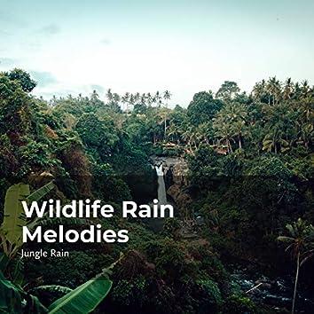 Wildlife Rain Melodies