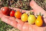 Zoom IMG-1 200 semi pomodoro in 20
