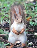 Notebook: College Ruled Composition Notebook / Squirrel Cover