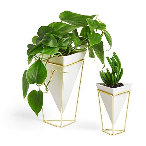 Umbra Trigg Desktop Planter Vase & Geometric Container - Great For Succulent Plants, Air Plant, Mini Cactus, Faux Plants and More, White Ceramic/Brass (Set of 2) (Renewed)