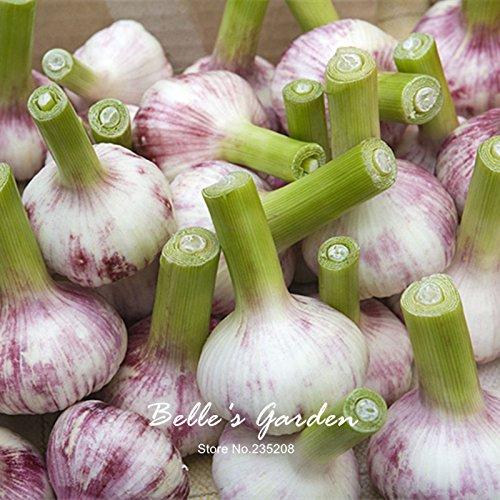 100pcs Knoblauch Samen Gesunde Köstliche stechend Spice Gemüsesamen Pure Natural Organic Vegetable Seeds Pflanze DIY Hausgarten