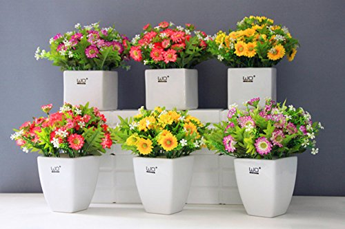 100 graines de marguerite Livingstone Daisy Graines graine fleur jaune variété complète le taux de 95% en herbe Vivaces Plantes en pot