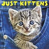 Just Kittens 2020 Wall Calendar