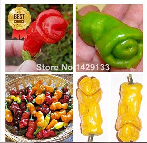 de graines Mr.seeds Pénis Red Hot Chili Pepper Peter Légumes et graines de fruits Les poivrons les plus drôles bonsaïs de semences pour le jardin de la maison