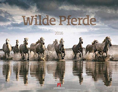 Wilde Pferde 2016