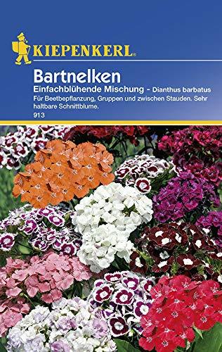 Kiepenkerl 913 Bartnelke...