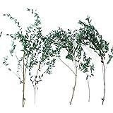 IrahdBowen Ramo de flores preservadas secas con hojas de eucalipto estilo nórdico simulación de hojas de eucalipto ramo de flores secas eternas para decoración de bodas accesorios de awesome