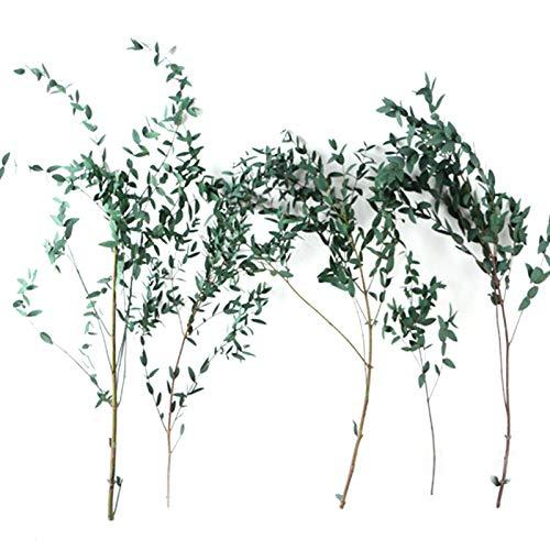 Eukalyptusblatt Getrocknete Blumendekoration, 100 Natürliches Eukalyptusblatt Ewige Haltbarkeit, Für Heimdekoration, Foto Requisiten, Raumduft, 40-60 Cm