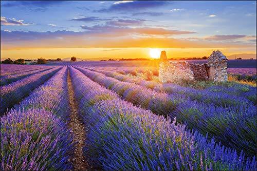 Muralo Fototapete Landschaft 150 x 225 cm Vlies Tapete Wandtapeten Lavendel Feld Himmel Wohnzimmer Schlafzimmer Moderne Wandbilder XXL Natur Panorama Wand Dekoration