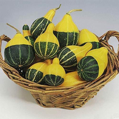 SANHOC 10 Stück Meistgesehe Wert von Kürbis-Samen Mandarinen-Enten-Birne