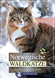 Norwegische Waldkatze: Skandinaviens sanfte Wilde (Katzen)