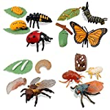 TOYMANY 16PCS Insect Figurines Life Cycle of Monarch Butterfly,Honey Bee,Cicada,Ladybug, Plastic Caterpillars to Butterflies Bug Figures Toy Kit Educational School Project for Kids Toddlers