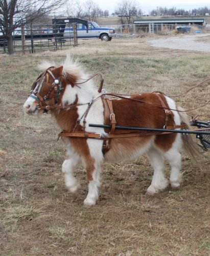 Super Heavyweight Mini Miniature Russet Brown Horse Driving Harness