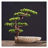 Bonsai Plant Simulación de estilo chino Potted Bonsai Bonsai Booning Pine Green Plants Decoración de la decoración cubierta de la sala de estar de la decoración de la decoración de la decoración de la