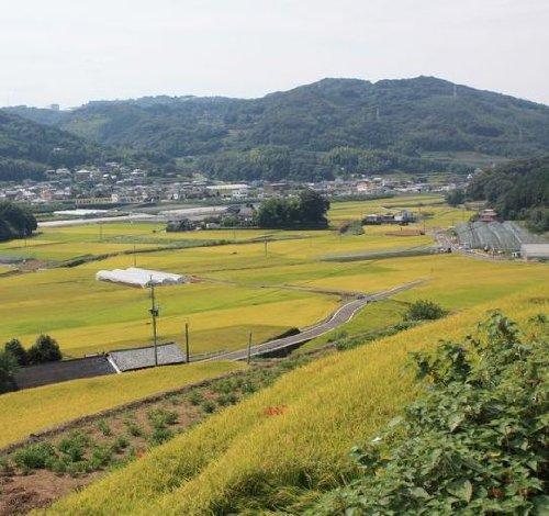 新米 九州長崎県産大村市上鈴田地区のモチ米 1kg