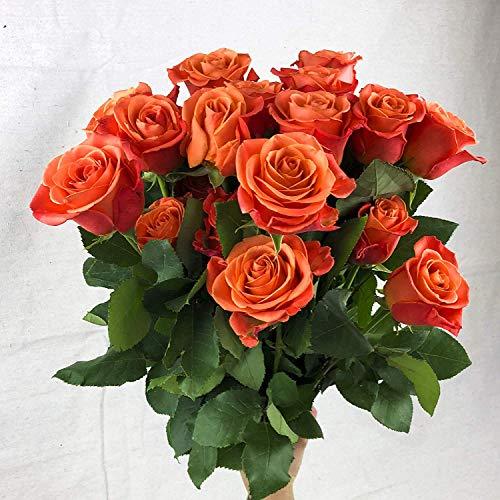 Green Choice Fresh Flowers bulk | 24 Orange Roses Fresh Cut Flowers For Delivery | Prime Fresh Bulk Flowers | Birthday Flowers | (2 Dozen) - 20 inch Long Stem Flower Cut Direct from Farm