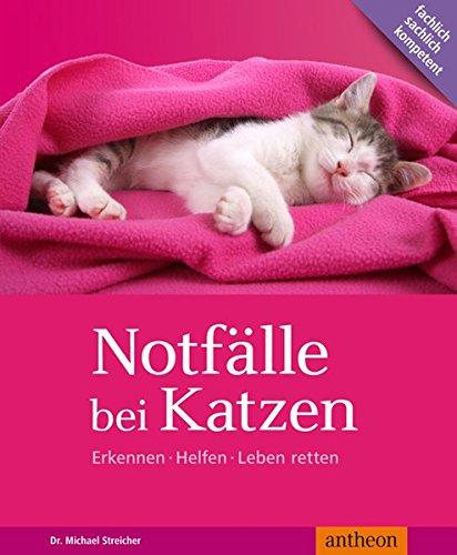 Notfälle bei Katzen: Erkennen Helfen Leben retten