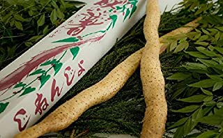 くわはら農園 自然薯1.3kg 1~2本程 とろろ 山芋