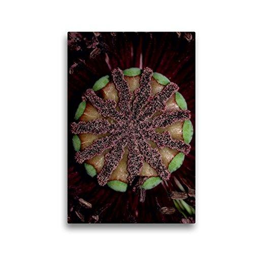 CALVENDO Premium Textil-Leinwand 30 x 45 cm Hoch-Format Die Narbe, Leinwanddruck von Brigitte Deus-Neumann