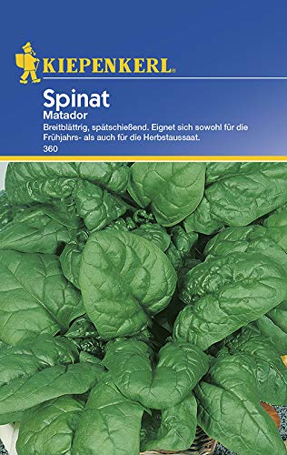 Spinatsamen - Spinat Matador von Kiepenkerl