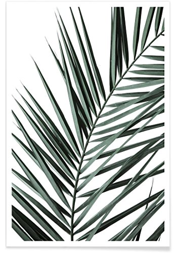 "JUNIQE® Palmen Poster 20x30cm - Design ""Phoenix"" entworfen von Shot by Clint"