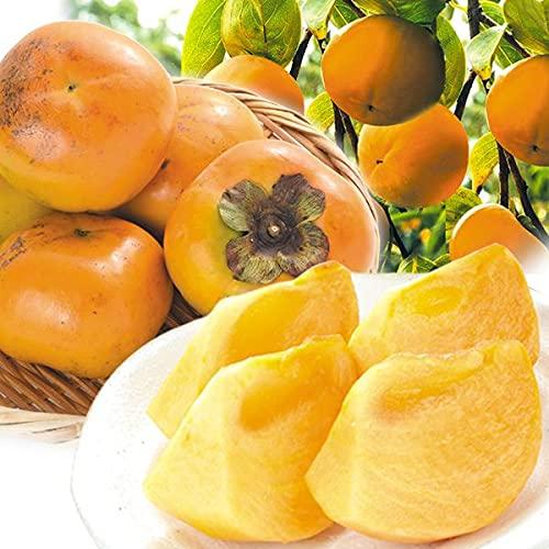 国華園 柿 福岡産 太秋柿 約4�s 1箱 食品