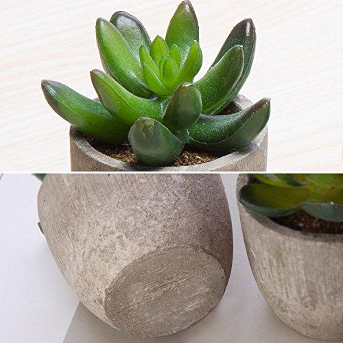 MoonLa Artificial Succulent Plants-5 Pack