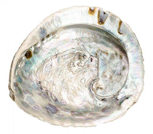 NaDeco Haliotis midae ca. 12-16cm Abalone Schnecke Abalone Muschel Seeopal Meerohr Räucherschale Seifenschale Räuchermuschel